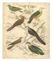 Avian Habitat II Fine Art Print