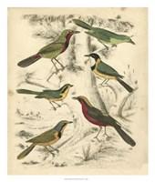 Avian Habitat III Fine Art Print