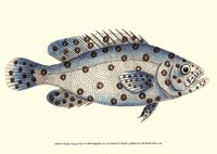 Antique Fish I Fine Art Print