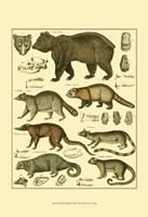 Bear & Racoon Fine Art Print