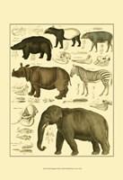Elephant & Zebra Fine Art Print