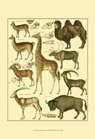 Giraffe & Camel Fine Art Print