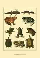 Amphibians Fine Art Print