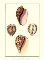 Cymbidum Shells Framed Print
