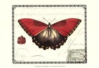 Butterfly Prose I Framed Print
