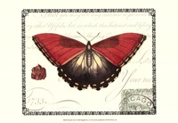 Butterfly Prose I Fine Art Print