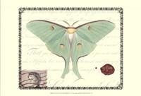 Butterfly Prose VI Framed Print