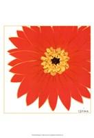 Bright Blossoms I Framed Print