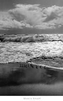 Shorebirds, Point Reyes Fine Art Print