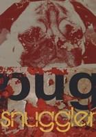 Pug Snuggler Framed Print