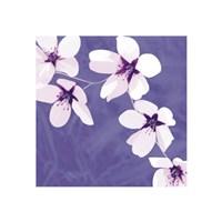 Blossom #1 Fine Art Print