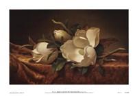 Magnolia On Gold Velvet Cloth Fine Art Print