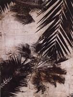 Palms I Framed Print