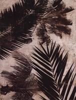 Palms II Framed Print
