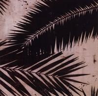 Palmy II Fine Art Print