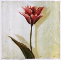 Tulip III Fine Art Print