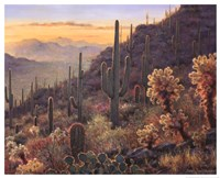 Sonoran Sunset Fine Art Print