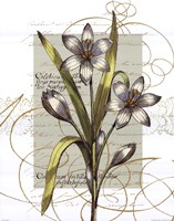 Florilegium I Fine Art Print
