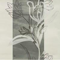 Petal Silhouettes 2 Fine Art Print