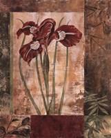 Jeweled Iris I Fine Art Print