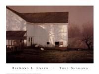 Tree Shadows Fine Art Print