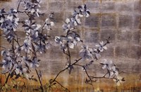 Silver Dogwood Fine Art Print
