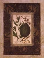 Leaf Study II Fine Art Print