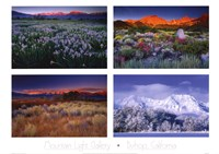 Four Seasons Fine Art Print