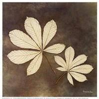 Horse Chestnut Leaf Fine Art Print