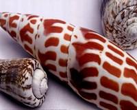 Linen Shell Collage Fine Art Print