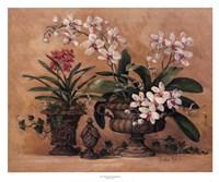 An Orchid Renaissance Fine Art Print