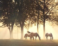 Horses in the Mist Fine Art Print