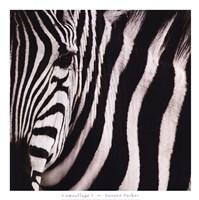 Camouflage I Framed Print
