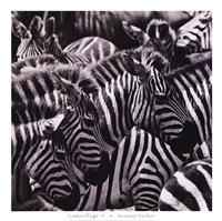 Camouflage II Fine Art Print
