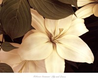 Lily and Leaves Fine Art Print