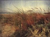 Sand Dunes II Framed Print