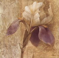 Brocade Iris Fine Art Print