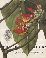 Botanique Tropicale I Fine Art Print