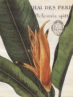 Botanique Tropicale II Fine Art Print