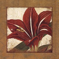 Lily Bloom Framed Print