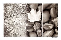 Nature Trio Fine Art Print