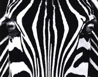 Black and White I Framed Print