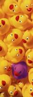 Quack Quack II Framed Print
