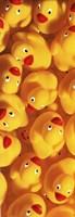 Quack Quack III Framed Print