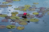 Waterlilies Wall Poster