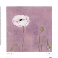 Poppy ll Framed Print
