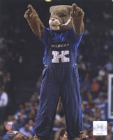 University of Kentucky Wildcats Mascot Fine Art Print