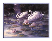 Swans and Bridge Fine Art Print