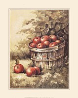 Barrel Apples Framed Print