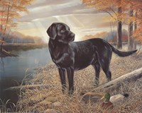 Black Lab with Decoys Framed Print